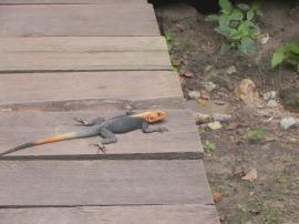 Big Ass Lizards