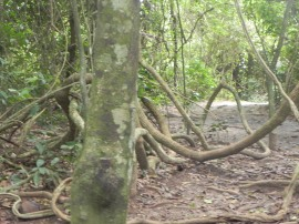 Check out these roots.