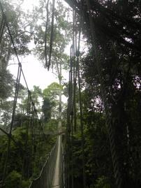 Kakum Natl Park Canopy Walkway